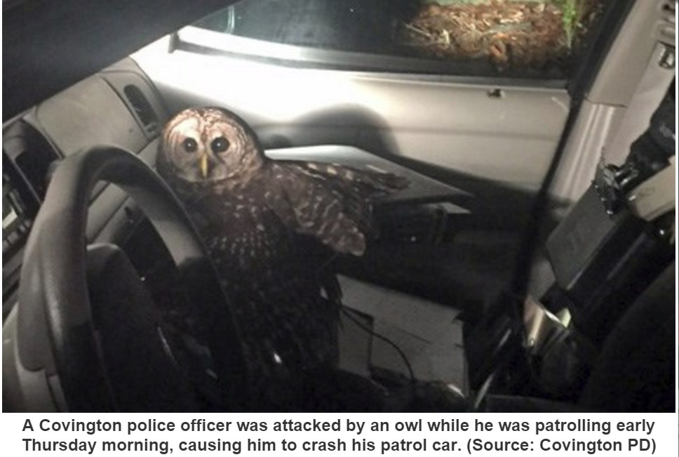 Police officer wrecks patrol car after Owl insists on #Christmas Eve ride  #Louisiana (1/3)